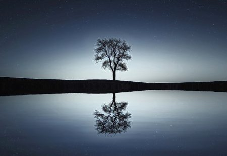 Tree reflected in water representing one-to-one therapy from See for Miles